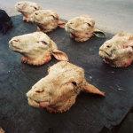 Smilies, sheep heads take away, Langa, Cape Town, 2003