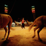 Suzi, Boswell Wilkie Circus, Cape Town, South Africa, 2001
