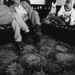 North End Family, Port Elizabeth, 1999